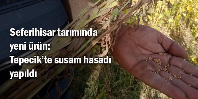 Tepecikli çiftçi susam hasadı yaptı